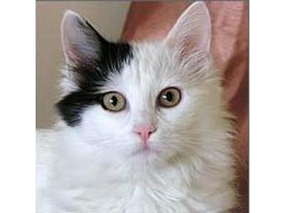 Hodowla Kotów Rasowych Rybnik śląskie Favorepl