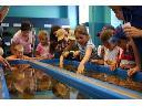 Atrakcje dla dzieci Trójmiasto, Kaszuby, Pomorze, Gdańsk, Gdynia, Sopot, Kaszuby, pomorskie (pomorskie)