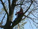 Pielęgnacja drzew metodami alpinistycznymi, Opole, opolskie