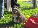 Hodowla psów dla AlergikówBiałe Bursztynk, Gdańsk, pomorskie