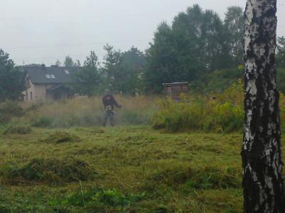 Wycinka drzew, cięcie żywopłotów, koszenie traw - tanio i szybko!, Sosnowiec,Będzin,Katowice (śląskie)