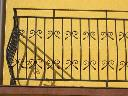 Bramy,balustrady.ogrodzenia Kute-kraty okienne, Tłuszcz, mazowieckie