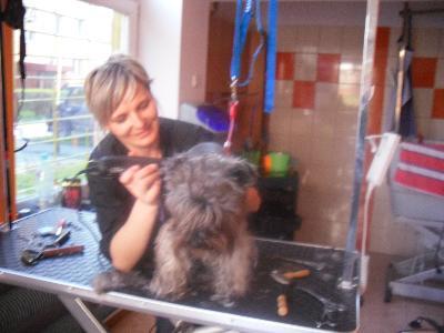 Psi Fryzjer Kielce Fryzjer Dla Psów I Kotów świętokrzyskie