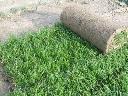 Trawa rolowana, trawa z rolki, trawnik w rolkach