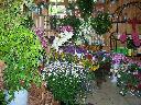szkolenia florystyczne kurs młodszy florysta 130H, Kielce, świętokrzyskie