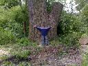 wycinanie drzew , też owocowych, Łódź, łódzkie