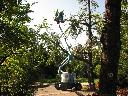 Wycinka przydrożnych drzew, podnośnik koszowy do wysokości 22 m, Legnica, Jawor, Chojnów, Złotoryja, Polkowice, dolnośląskie