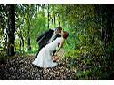 Fotograf, ślub, wesele, fotografia, zdjęcia, foto