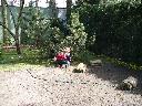 Żywopłoty, drzewa - formowanie, wycinka ŁÓDŹ, Łódź, okolice, łódzkie