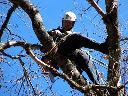 Wycinanie i przyciananie drzew, pielęgnacja drzew, Łódź, łódzkie