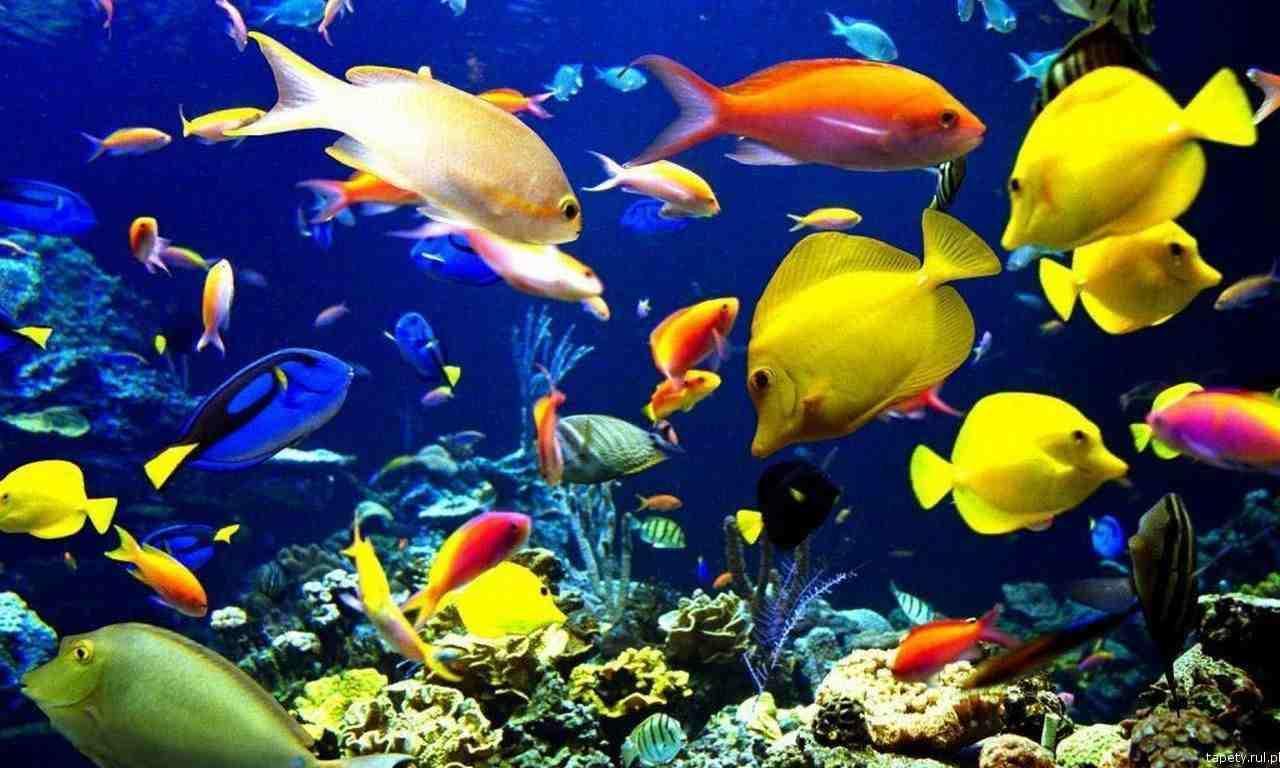 Galeria dla usługi akwaria akwarium morskie zakładanie serwis