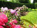 Rabata rododendronowa