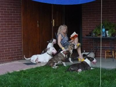 Jedyna w Polsce Szkoła dla Wyjątkowych Właścicieli psów - kliknij, aby powiększyć