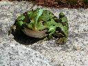 wygrzewająca się żaba przy oczku wodnym