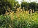 Koszenie trawy,zarośli,nieużytków,wycinka drzew, Kielce,okolice, świętokrzyskie