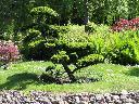 Zakładanie ogrodów Łódź, wycinka drzew, pielęgnacja ogrodów , łódź, łódzkie