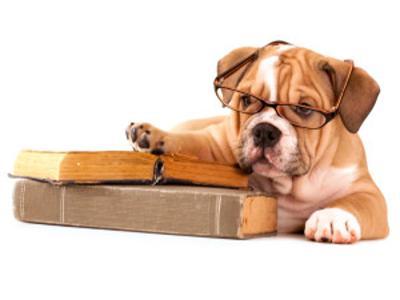 Wybieramy szkołę dla psa.