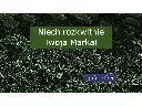 Tworzenie opisów i treści dla stron WWW, seo copywriting, copywriting, Gliwice, śląskie