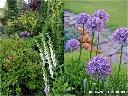 Projektowanie ogrodów Garwolin, rabata z bylinami