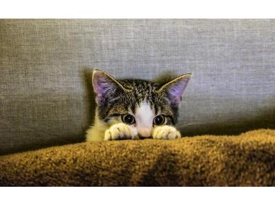 Interaktywne gadżety dla zwierząt, które pomogą zająć się pupilem