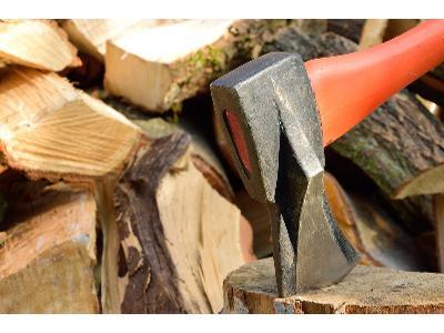 Nowelizacja ustawy o ochronie przyrody - wycinka drzew łatwiejsza?