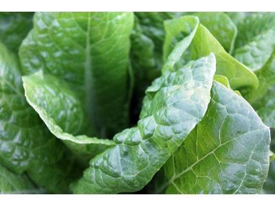 Bezcenna moc warzyw