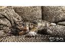 Pranie tapicerki meblowej w Twoim mieście, doświadczona firma od 2009, Osno lubuskie (lubuskie)