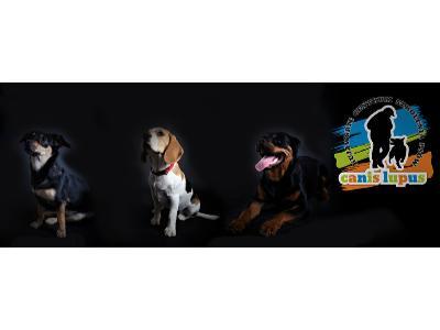 szkolenie psów,psie przedszkole,Bydgoszcz,pozytywne szkolenie psów , Bydgoszcz (kujawsko-pomorskie)