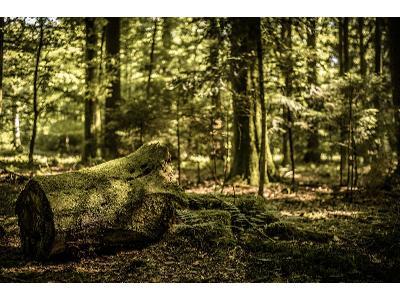 Wycinka drzew:  zaostrzono przepisy znowelizowanej ustawy o ochronie przyrody.