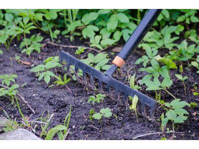 Najczęstsze błędy podczas pielęgnacji ogrodu