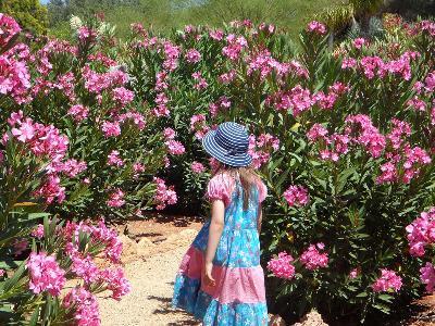 Trujące kwiaty doniczkowe