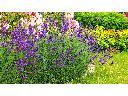 usługi ogrodnicze, pielęgnacja, projektowanie, realizacja ogrodów, Radom, mazowieckie