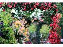 Usługi ogrodnicze - Brukarstwo - Aranżacja ogrodów, katowice (śląskie)