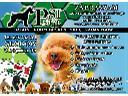 PSI STYL, Salon Groomeski, pielęgnacja psów, strzyżenie psów, Głogów (dolnośląskie)