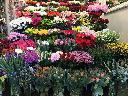 Bukiety, ślubne, świeże kwiaty cięte, kwiaty doniczkowe, ozdoby, Gliwice (śląskie)