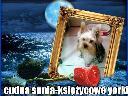 Kameralna hodowla yorkshire terrier ,miniaturowe - Księżycowe yorki, kraków, małopolskie