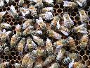 Zwalczanie os i szerszeni, usuwanie gniazd os, szerszeni i pszczół, Kraków (małopolskie)