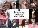 Psi fryzjer, salon dla psów, fryzjer dla psa, groomer, , Radlin (śląskie)
