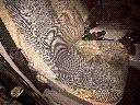 Pranie tapicerki materiałowej, skórzanej Wałbrzych+20km, Wałbrzych (dolnośląskie)
