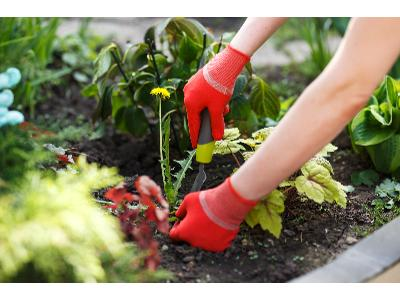 Jak pozbyć się chwastów z ogrodu?