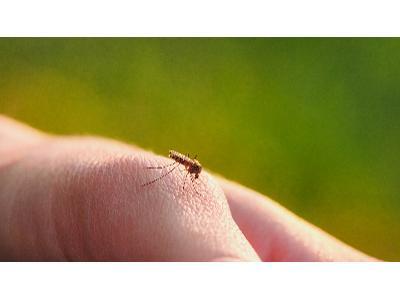 Najlepsze domowe sposoby na komary
