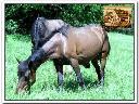 Jazda konna Korbielów - Stadnina koni huculskich, Korbielów, śląskie