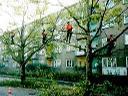 OGROBUD - Pielęgnacja drzew - ZAPRASZAMY DO NAS!!, Pleszew, wielkopolskie