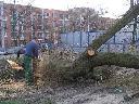 Wycinka cięcie drzew WARSZAWA, Warszawa, mazowieckie