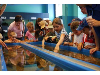 Gdynia - akwarium - sala mokra, gdzie można głaskać ryby - kliknij, aby powiększyć