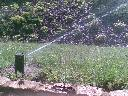 Nawadnianie ogrody oczka wodne Zielona Góra , Zielona Góra, lubuskie
