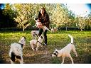 Przyjazny hotel dla psów- Twoja Psia Niania, Straszyn, pomorskie