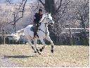 pensjonat,boksy ,stajnia,jazda konna,treningi jeździeckie, Paczółtowice, małopolskie