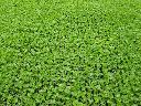 Rozsada warzyw, Rychwał, wielkopolskie