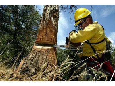 wycinanie drzew - kliknij, aby powiększyć